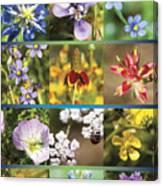 Spring Wildflowers II Canvas Print