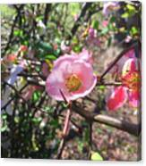 Springtime In The South Canvas Print