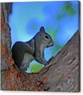1- Squirrel Canvas Print