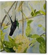 St. Lucian Hummingbird Canvas Print