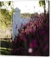 Cape Farm Courtyard  Canvas Print