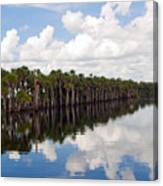 Stick Marsh In Fellsmere Florida Canvas Print