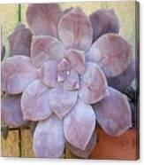 Stone Flower Canvas Print