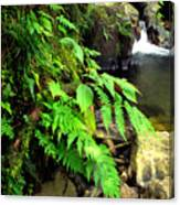 Stream El Yunque National Forest Canvas Print