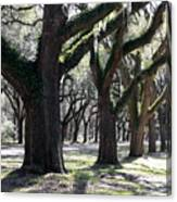 Strong Trees In The South Canvas Print