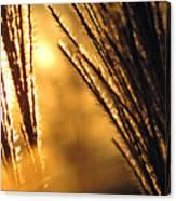 Sun Grass Wind Canvas Print