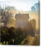 Sun Rays In Morning Fog Vineyard View Canvas Print