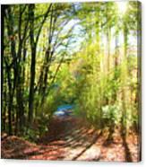 Sunny Autumn Path Canvas Print