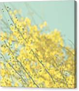 Sunny Blooms 3 Canvas Print
