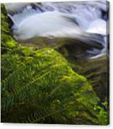 Sweet Creek Oregon 11 Canvas Print