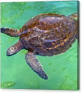 Swimming Along Canvas Print