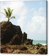 Tambaba Beach Canvas Print
