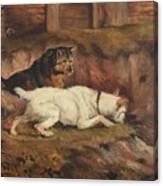 Terriers Ratting Canvas Print