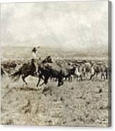 Texas: Cowboy, C1908 Canvas Print