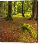 The Ardgartan Forest Canvas Print