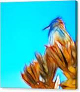 The Cactus Wren Canvas Print
