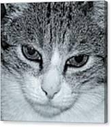 The Cat's Innocense Canvas Print