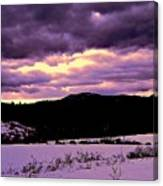 The Color Purple Canvas Print