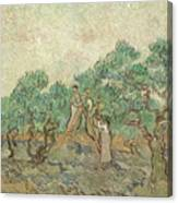 The Olive Orchard, 1889 Canvas Print