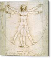 The Proportions Of The Human Figure Canvas Print