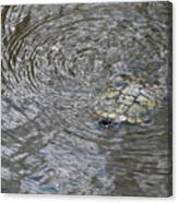 The Swimming Turtle Canvas Print