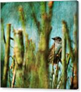 The Thrush Canvas Print