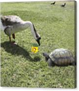 The Turtle And The Goose Canvas Print