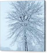 The Winter Tree  Canvas Print