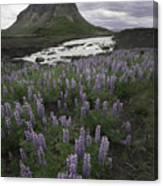 Thofafoss Waterfall Iceland 1571 Canvas Print