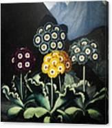 Thornton: Auriculas Canvas Print