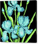 Three  Blue Irises Canvas Print