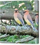 Three In A Row Canvas Print