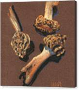 Three Morels Canvas Print