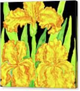 Three Yellow Irises, Painting Canvas Print