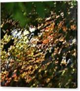 Through The Leaves Canvas Print