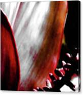 Ti Leaves Canvas Print
