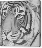 Tigar Canvas Print