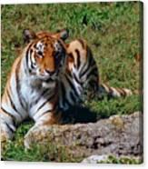 Tiger II Canvas Print