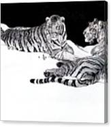 Tigers In The Snow Canvas Print