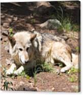 Tour Of Rocky Mountain Wildlife Foundation Canvas Print