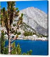 Treasured Pine Canvas Print