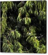 Tree 8 Canvas Print