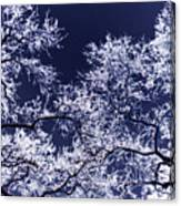 Tree Fantasy 17 Canvas Print