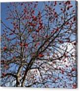 Tree In Benalmadena Canvas Print