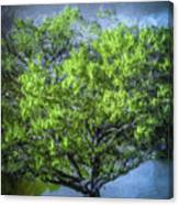 Tree On The Bank Canvas Print
