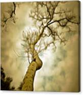 Tree Top In The Clouds Canvas Print