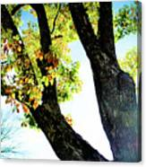 Tree With Light Canvas Print