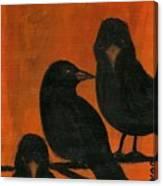 Trois Quervos Canvas Print