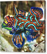 Tropical Fish Mandarinfish Canvas Print