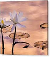 Tropical Lily Canvas Print
